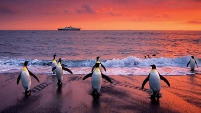 Da Lindblad Expeditions – National Geographic nuove spedizioni per la stagione 2015