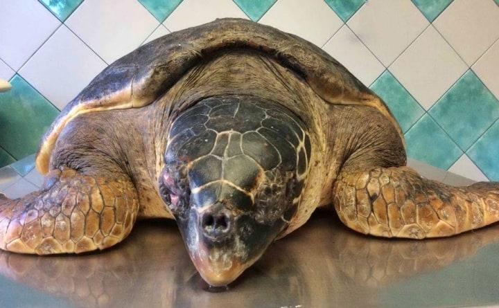 L acquario di cala gonone accoglie una tartaruga marina for Tartaruga da acquario