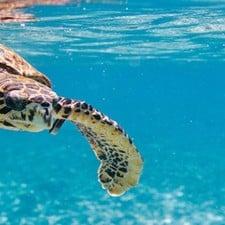 Crociere, business in crescita alle Seychelles