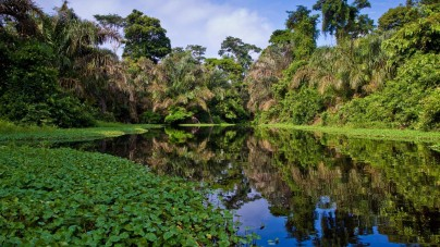 In crociera lungo il maestoso Rio delle Amazzoni