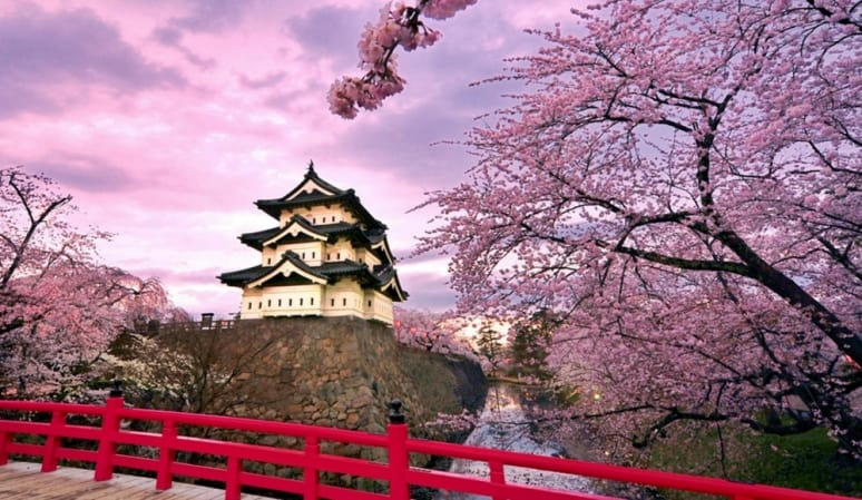 Giappone, ciliegi, Princess Cruises