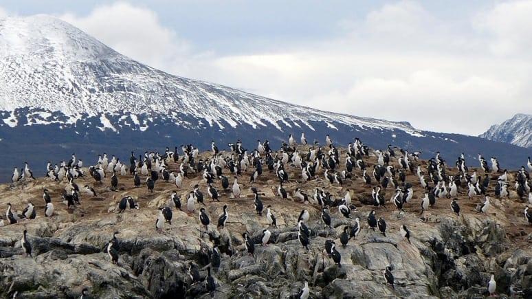 Ushuaia Pinguini
