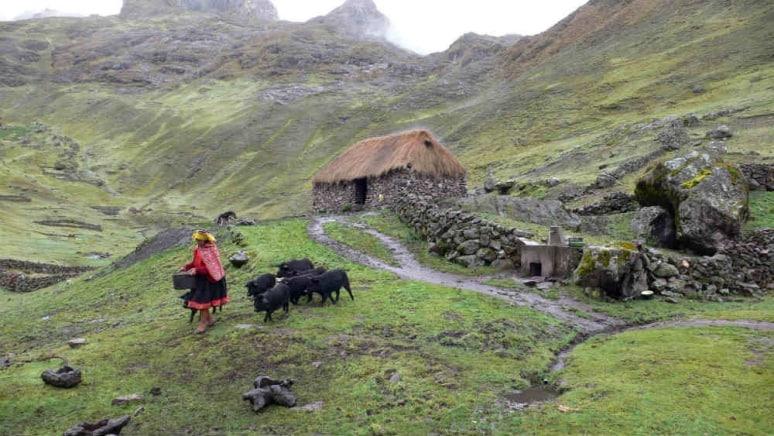 Patate Perù Slow Food